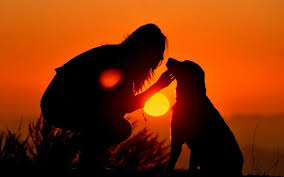Sunset and Dog