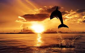 Sunset and Dolphin